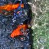 水の中の住人達
