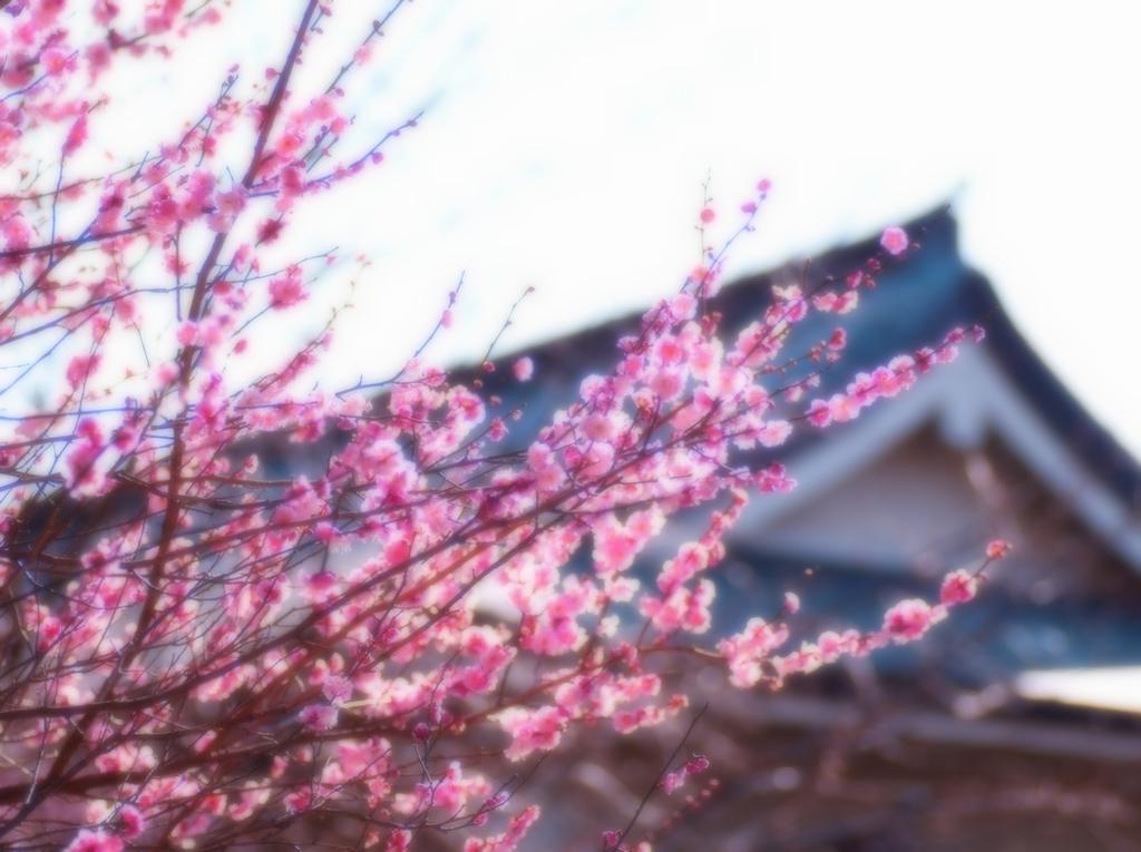 梅がある風景