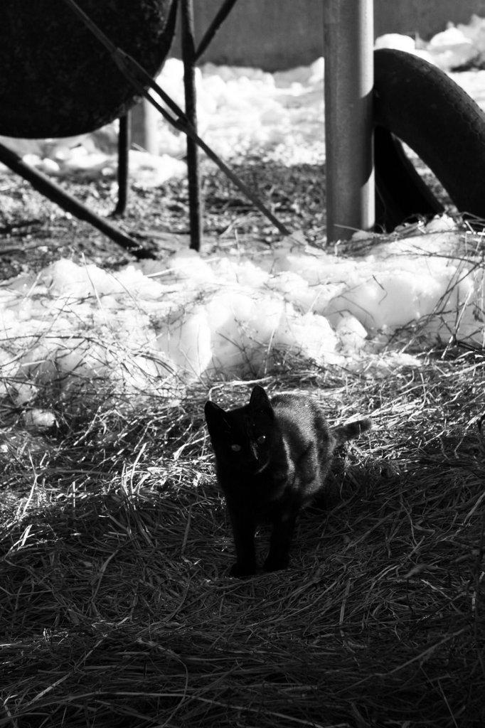 農家の野良猫