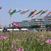 大和レンゲ祭り