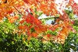 箱根の山中で