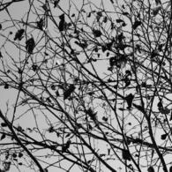 CANON Canon EOS Kiss X2で撮影した植物(Dead leaf )の写真(画像)