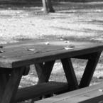CANON Canon EOS Kiss X2で撮影したインテリア・オブジェクト(秋の食卓)の写真(画像)