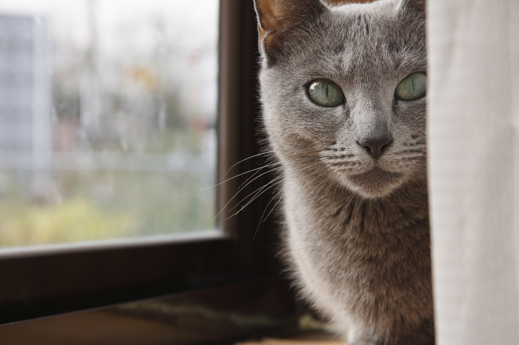 我が家のママ猫(ライブビュー撮影)