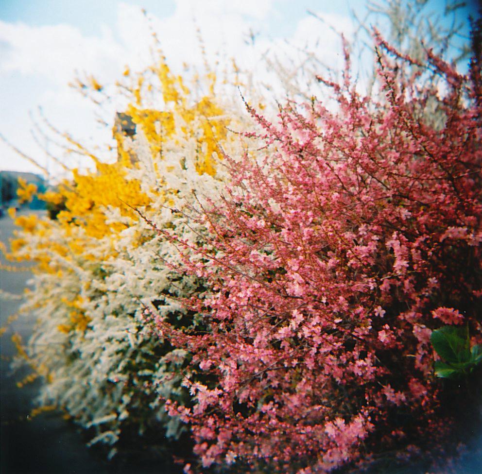 いつかの春。