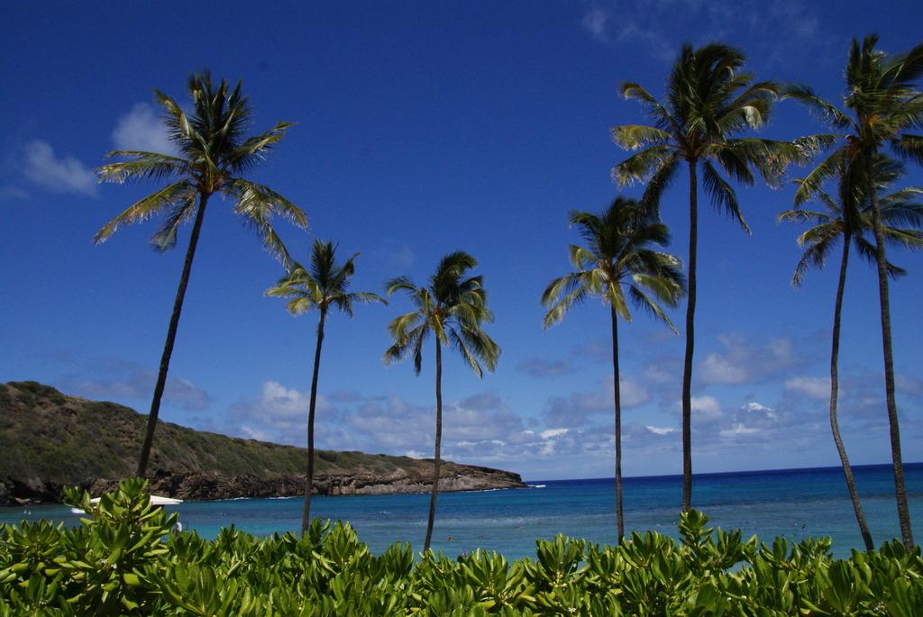 HawaiiSea
