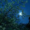 月明かりに濡れる