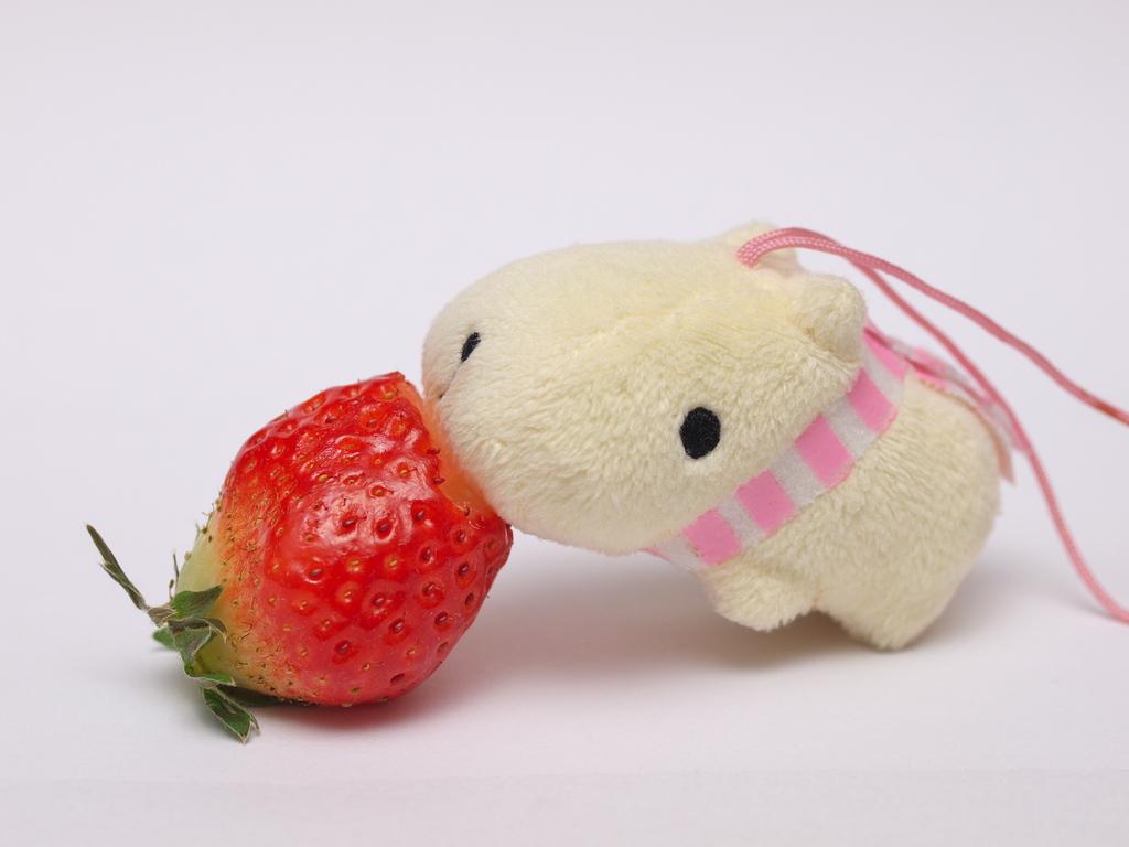苺カピバラさん