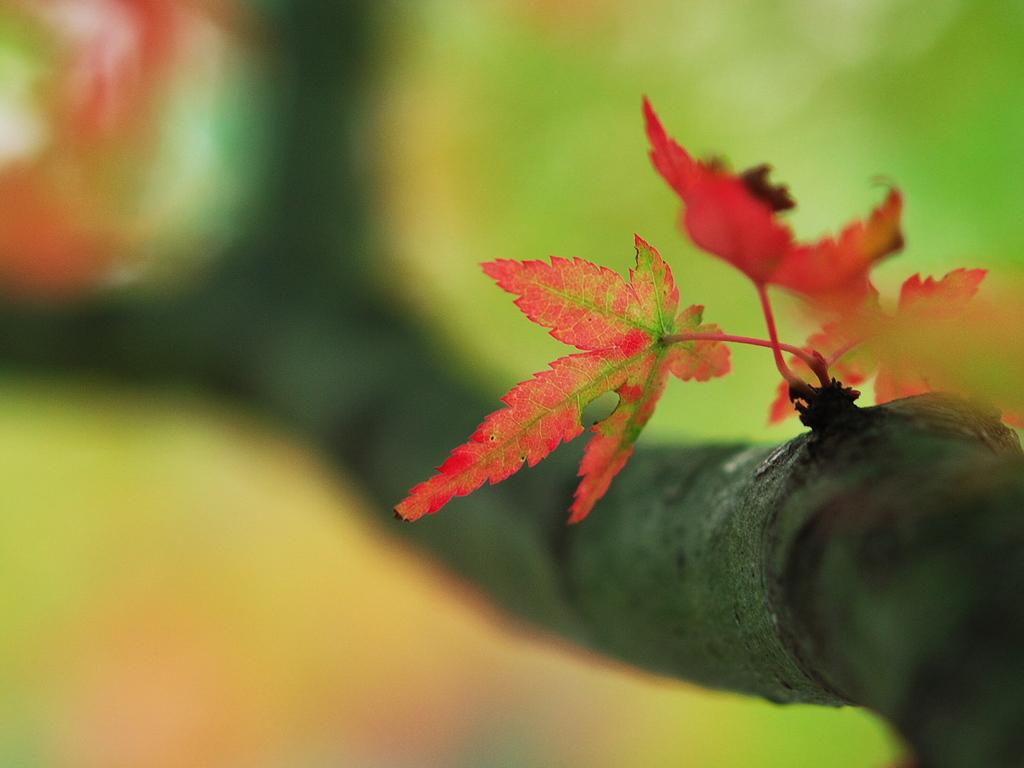 紅葉も終わり・・