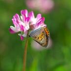 OLYMPUS E-1で撮影した植物(小さな春)の写真(画像)