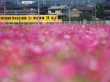 黄色い電車