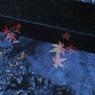 OLYMPUS E-1で撮影した植物(紅葉・・なごり)の写真(画像)