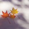 ボンネットの秋