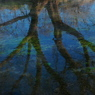 OLYMPUS E-1で撮影した植物(水木 )の写真(画像)