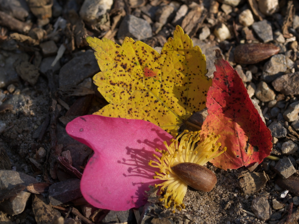 秋のセット