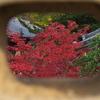 穴から紅葉