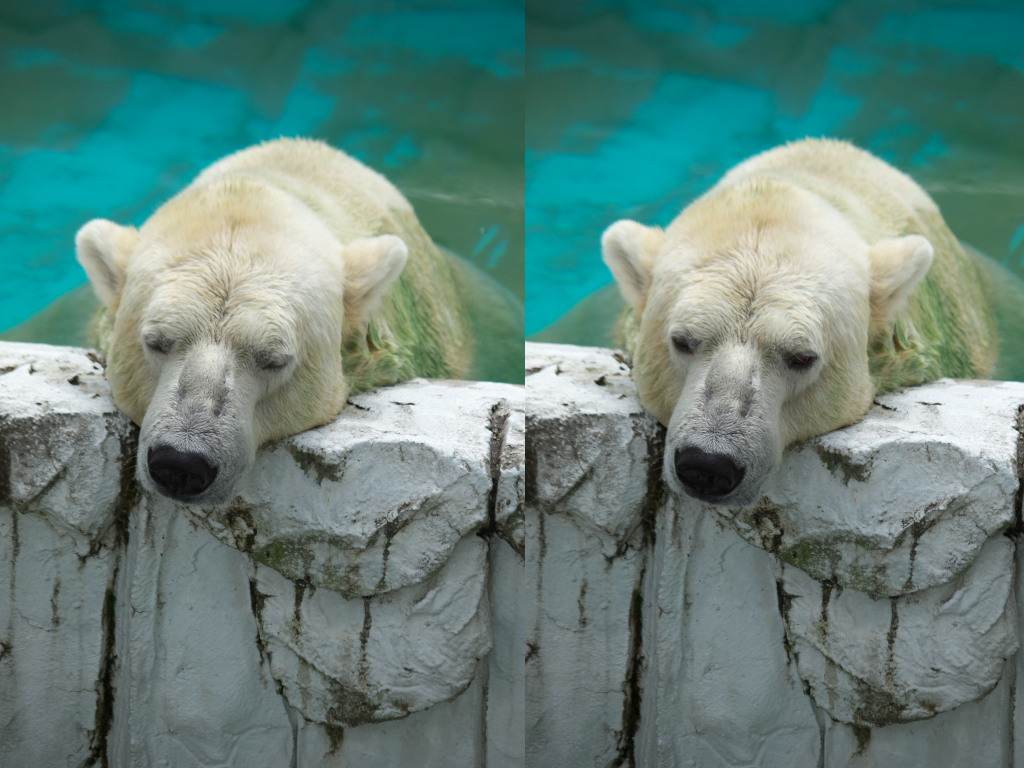 白クマさん再び・・