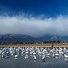 白鳥と北アルプス
