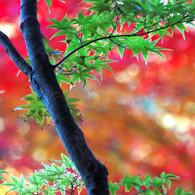 NIKON NIKON D40で撮影した植物(風雅)の写真(画像)