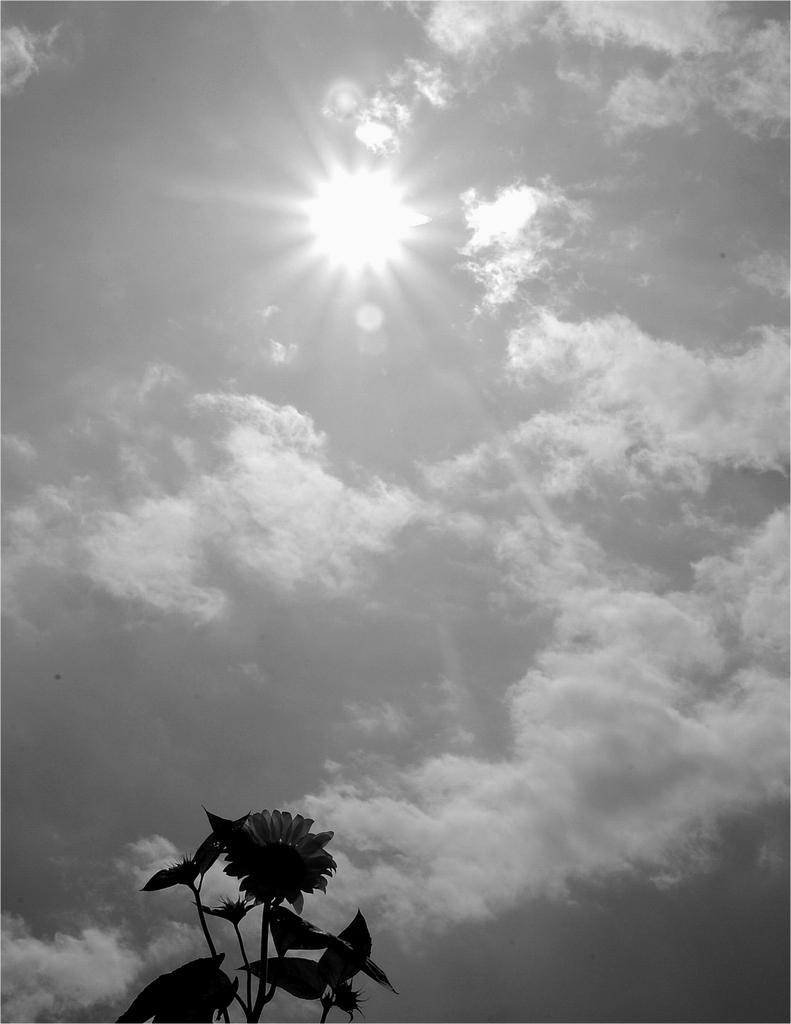 遠い日の夏
