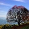 NIKON NIKON D40で撮影した植物(孤高の木)の写真(画像)