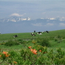 FUJIFILM FinePix S602で撮影した動物(放牧)の写真(画像)