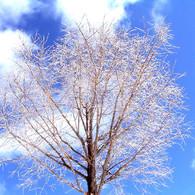 FUJIFILM FinePix S602で撮影した植物(樹氷)の写真(画像)