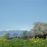 FUJIFILM FinePix S602で撮影した風景(信州の春)の写真(画像)