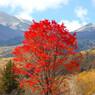 NIKON NIKON D40で撮影した風景(乗鞍高原の秋)の写真(画像)