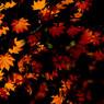 NIKON NIKON D40で撮影した植物(斜光)の写真(画像)