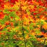NIKON NIKON D40で撮影した植物(彩り)の写真(画像)