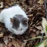 PENTAX PENTAX K10Dで撮影した動物(cat)の写真(画像)