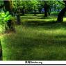 CANON Canon EOS 30Dで撮影した風景(緑)の写真(画像)