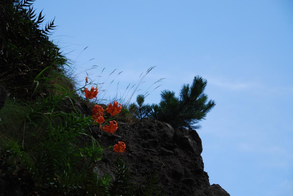 岩の上のユリ