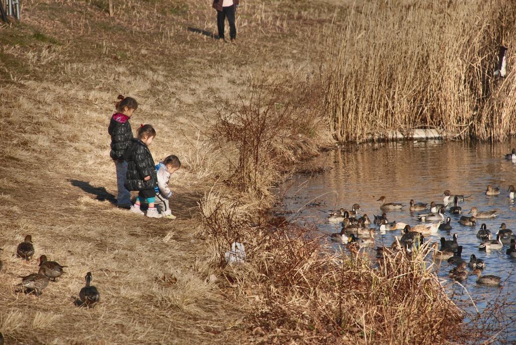 冬の城沼・3姉弟の戯れ-1-022
