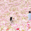 ピンクの海