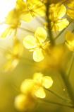 ひと足速い春(3)