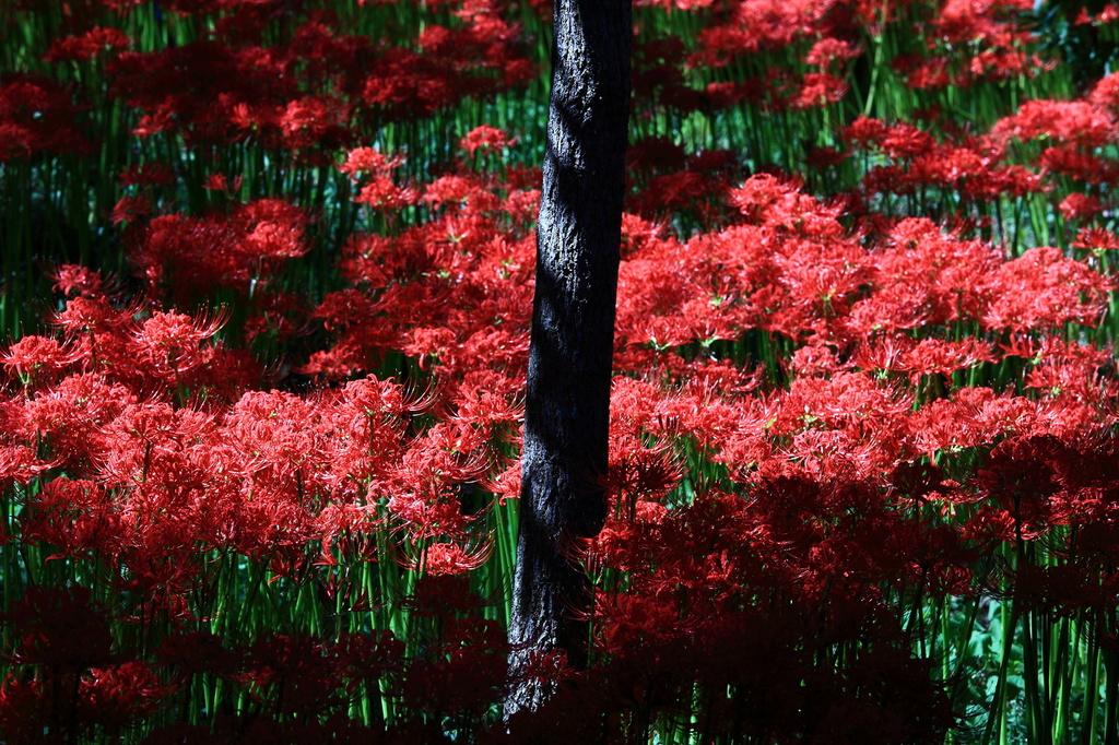 妖艶の赤18