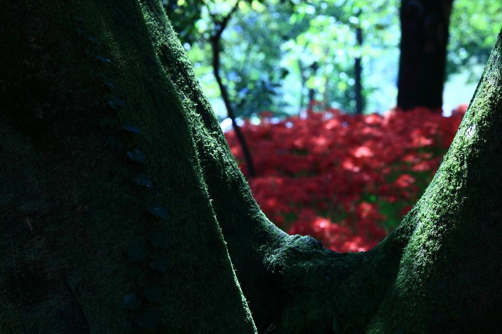 妖艶の赤19