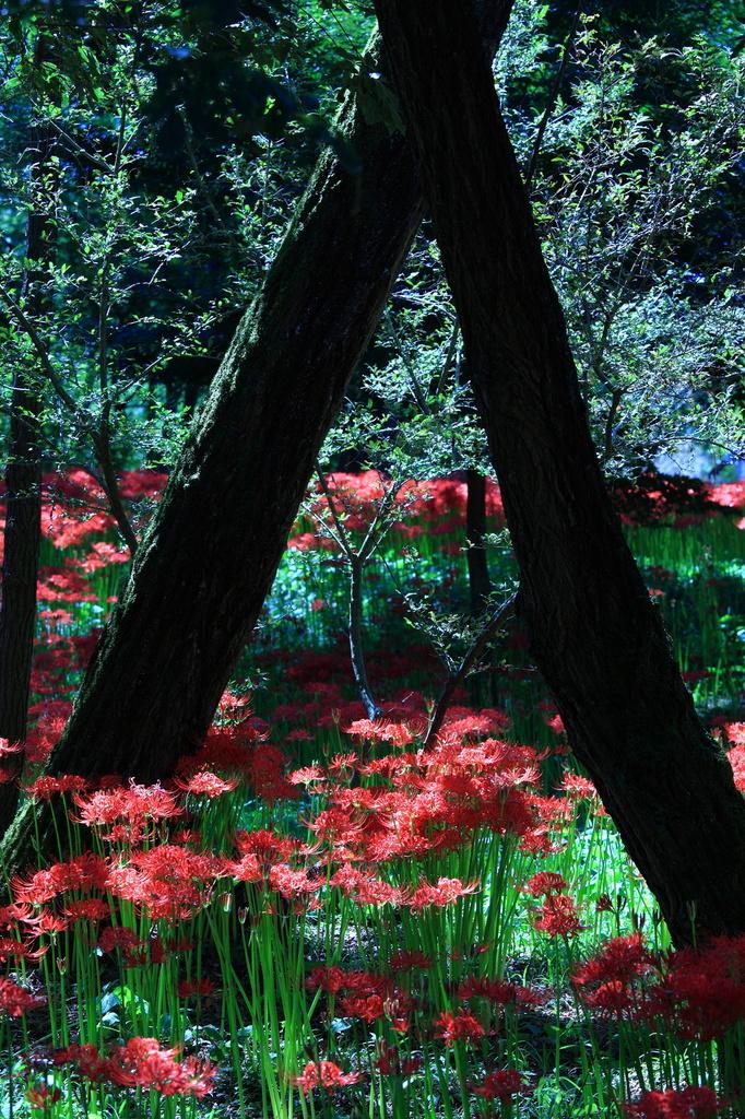 妖艶の赤13
