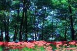 妖艶の赤16