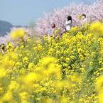CANON Canon EOS 5D Mark IIで撮影した植物(早咲きの桜)の写真(画像)
