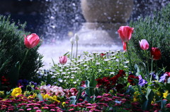 噴水前のチューリップと春の花