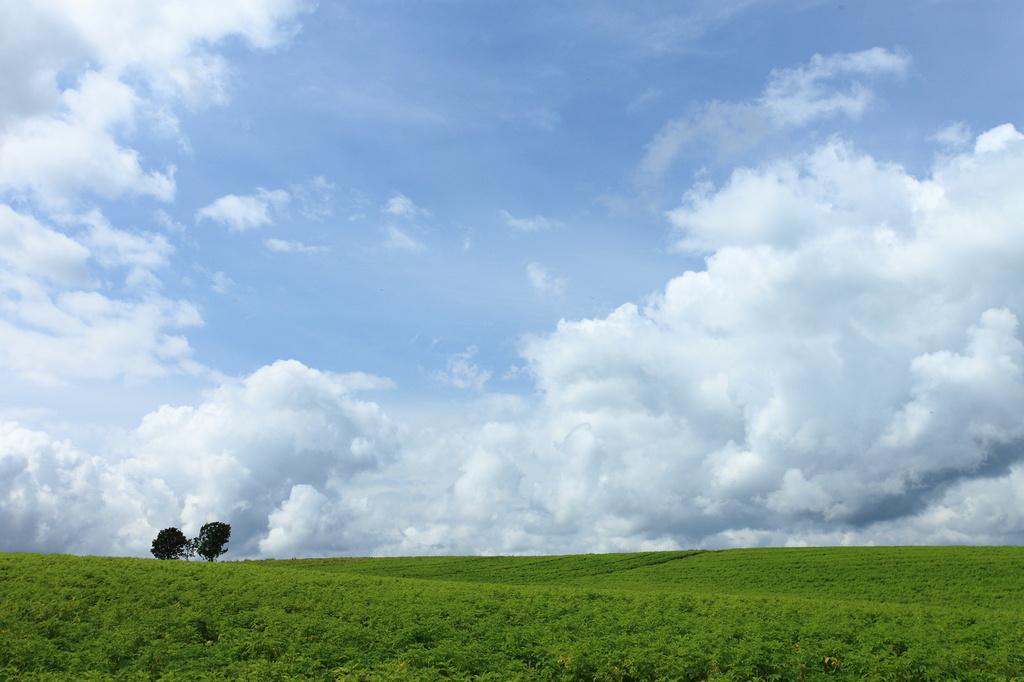 親子の木が見える丘で1