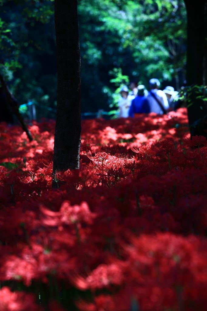 妖艶の赤6