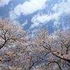 THE 春