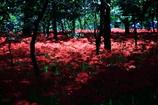 妖艶の赤4