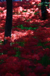 妖艶の赤5