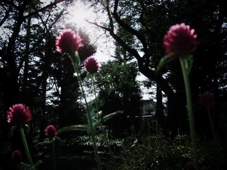花@別所沼公園