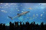 美ら海水族館のアイツ